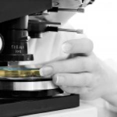 contract Histopathology